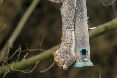 Squirrels Focus Mediation Blog